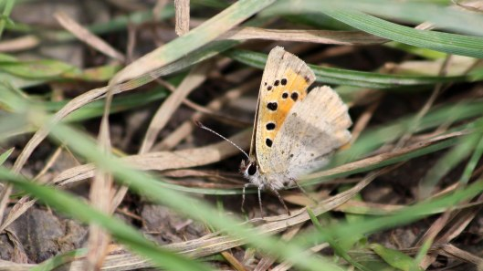 180612 1 small copper