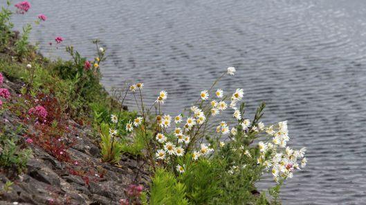 180615 3 wildflowers