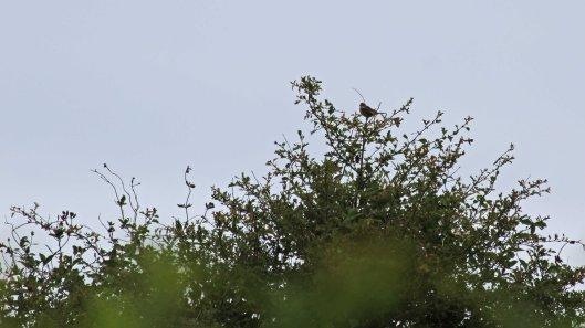 180616 2 distant bird