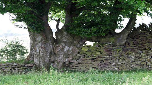 180617 Birding Bargoed uplands (12)