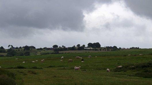 180617 Birding Bargoed uplands (5)