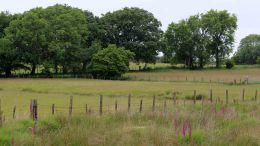 180617 Birding Bargoed uplands (7)