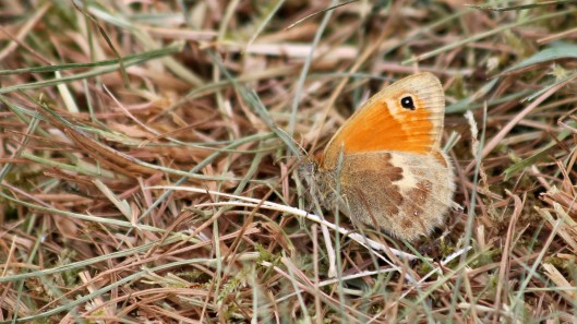 180705 1 small heath