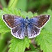 180726 confusing butterflies open wings (1)