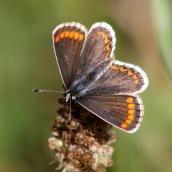 180726 confusing butterflies open wings (2)