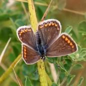 180726 confusing butterflies open wings (3)