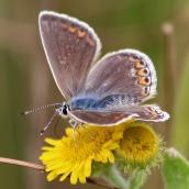 180726 confusing butterflies open wings (4)