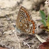 180726 confusing butterflies underwings (1)