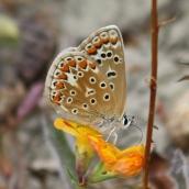 180726 confusing butterflies underwings (2)