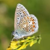 180726 confusing butterflies underwings (3)