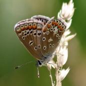 180726 confusing butterflies underwings (4)