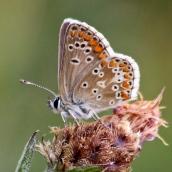 180726 confusing butterflies underwings (6)