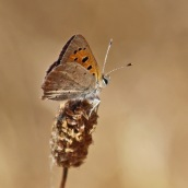 180731 b small copper