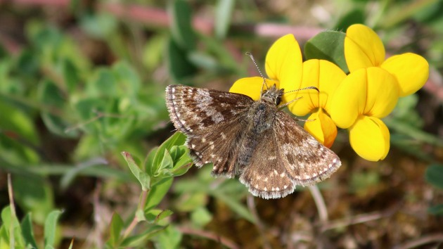 180517 dingy skipper