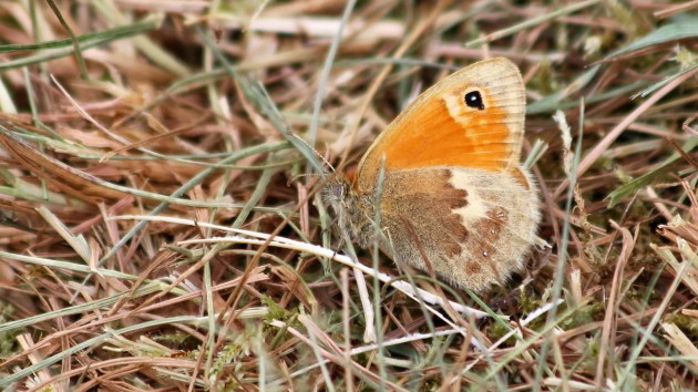 180523 small heath