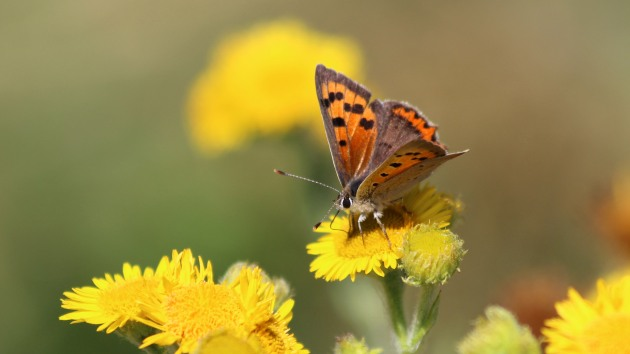 180608 small copper