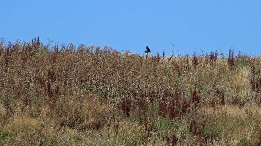 180807c buzzard