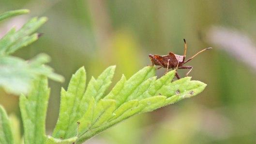180816 dock bugs (3)