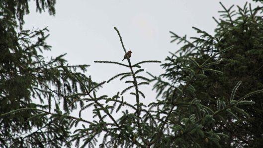 180823 birding at Garwnant (2)