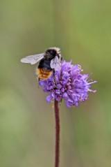 180824 bumblebee (6)