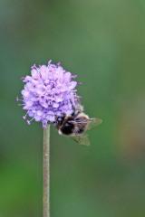 180824 bumblebee (7)