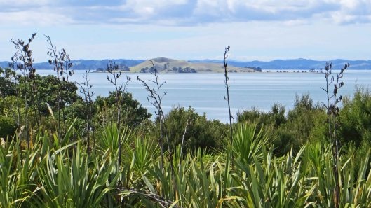 180903 New Zealand flax (2)