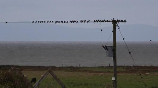 180917 birding at Kenfig (3)