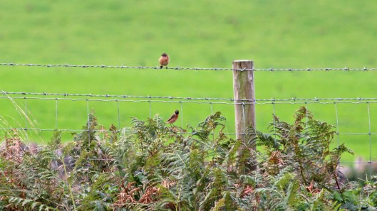 180917 birding at Kenfig (4)