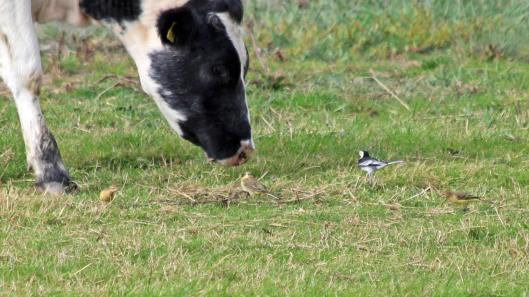 180918 birding goldcliff (4)