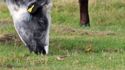 180918 birding goldcliff (5)