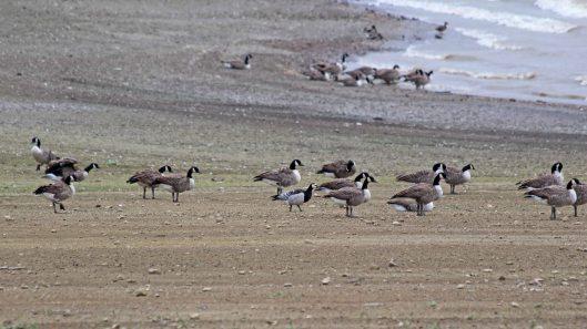 180920 birding Llandegfedd (9)