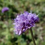 180928 Cosmeston flowers (11)