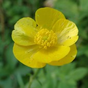 180928 Cosmeston flowers (13)