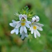 180928 Cosmeston flowers (14)