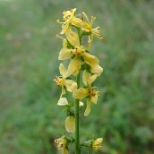 180928 Cosmeston flowers (15)