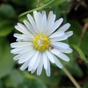 180928 Cosmeston flowers (18)
