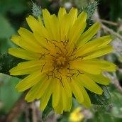 180928 Cosmeston flowers (2)