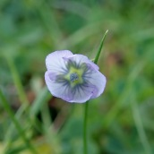 180928 Cosmeston flowers (20)