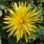 180928 Cosmeston flowers (24)