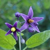 180928 Cosmeston flowers (25)