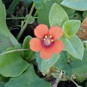 180928 Cosmeston flowers (26)