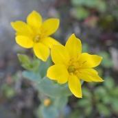 180928 Cosmeston flowers (27)