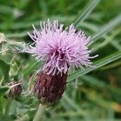 180928 Cosmeston flowers (3)
