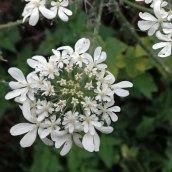 180928 Cosmeston flowers (4)