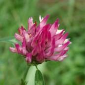 180928 Cosmeston flowers (6)