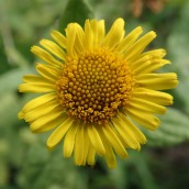 180928 Cosmeston flowers (7)