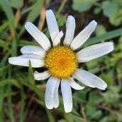 180928 Cosmeston flowers (9)