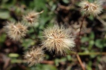 181010 seeds (1)