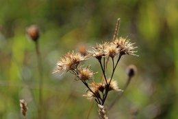 181010 seeds (5)