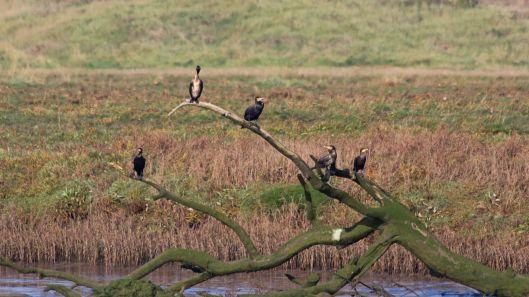 181011 Ogmore birding (1)